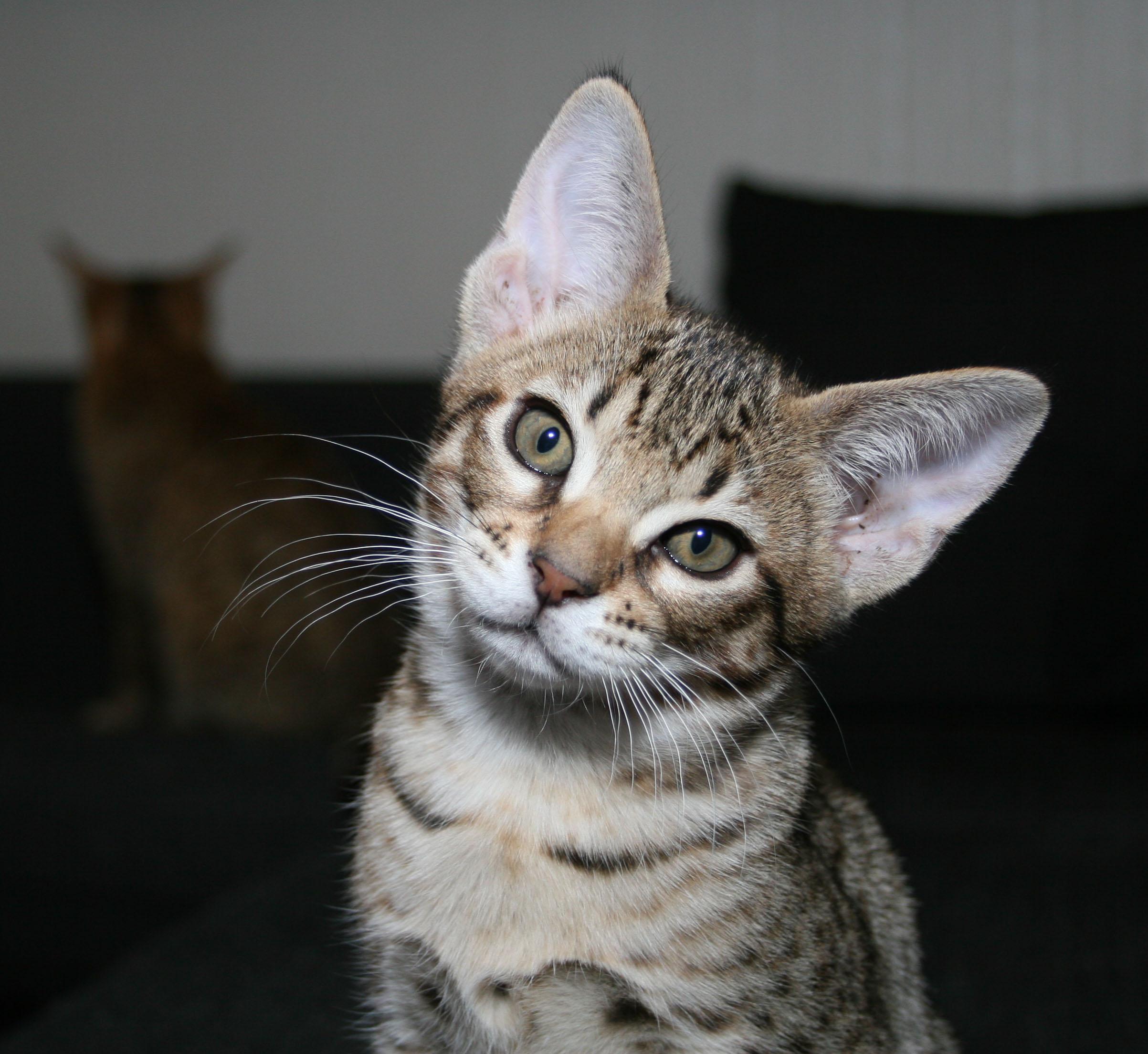Hej katten